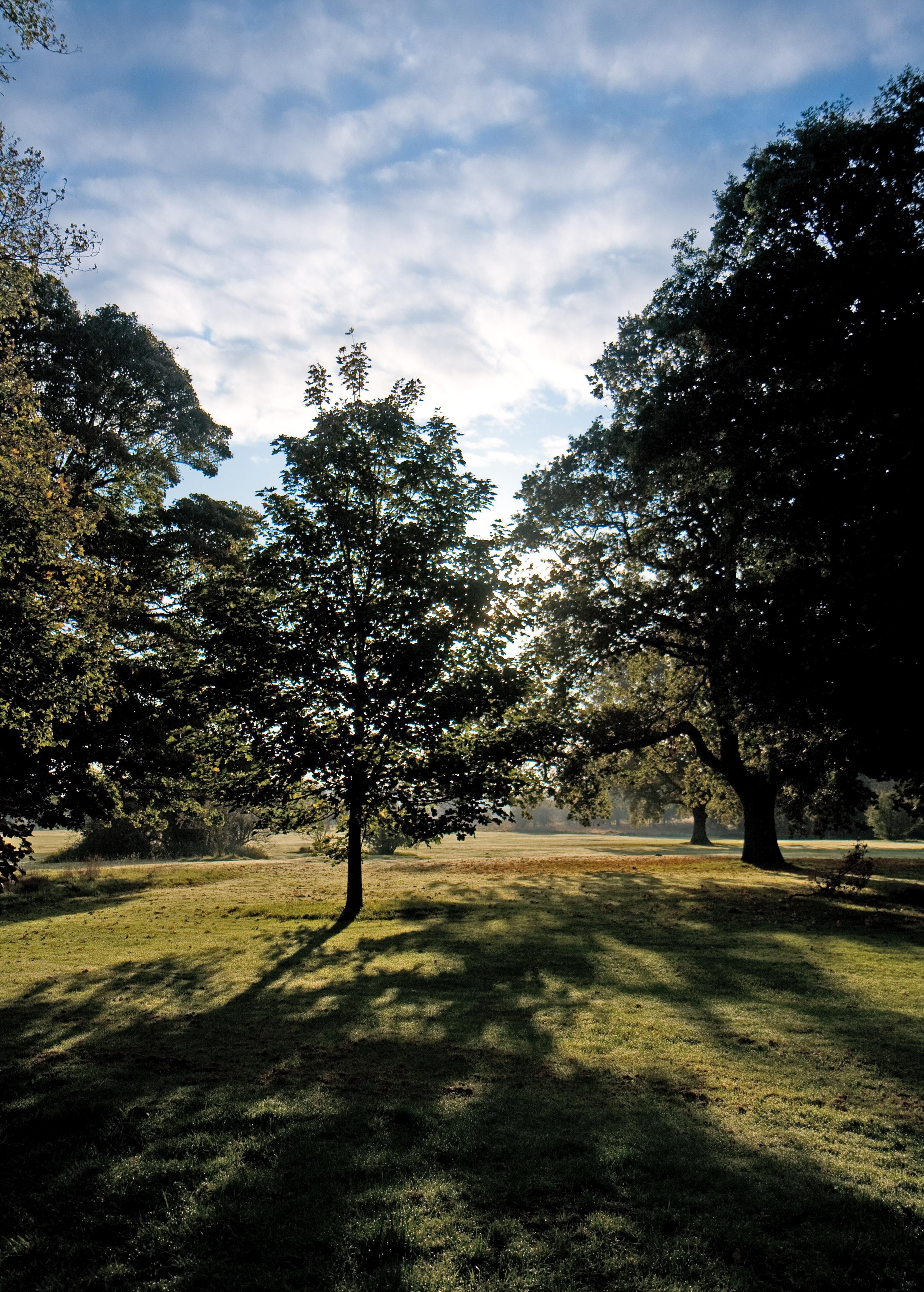 35 The Park